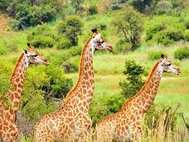 groenkloof nature reserve Pretoria