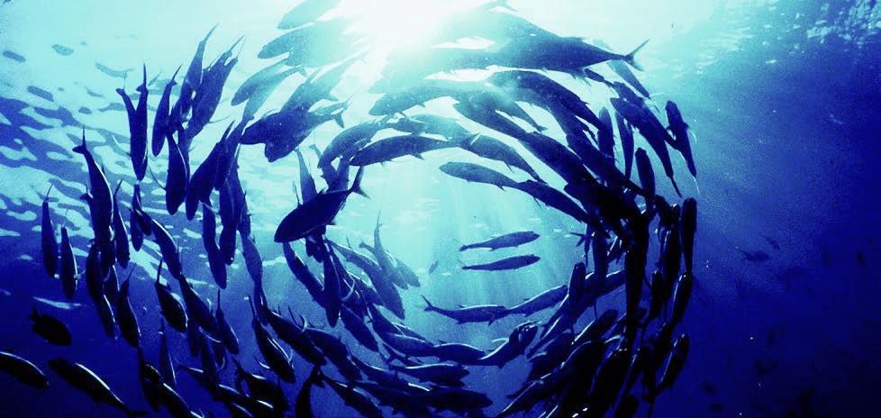 Ocean stress