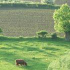 Natuur in Limburg