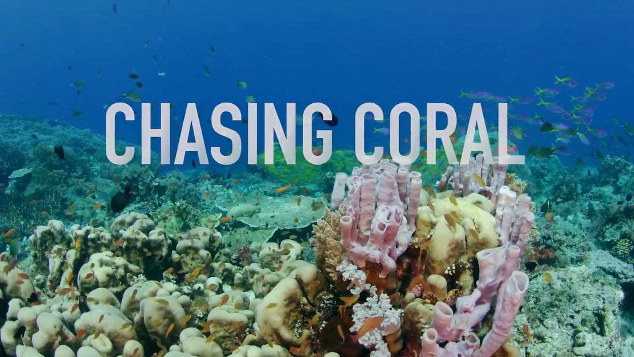 Chasing Coral text over coral reef image