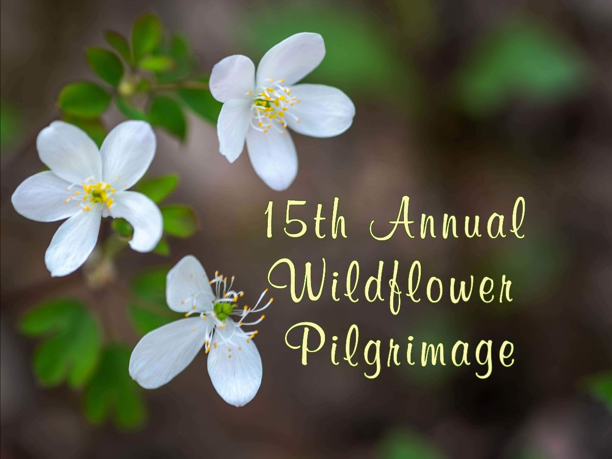 15th Annual Wildflower Pilgrimage
