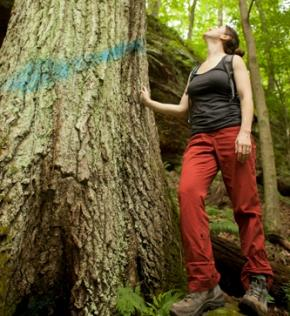 Woman standing by large tree in Spruce Run