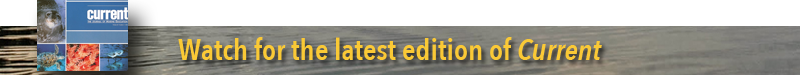 Current editor