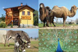 Farma Wenet hlásí nové přírůstky