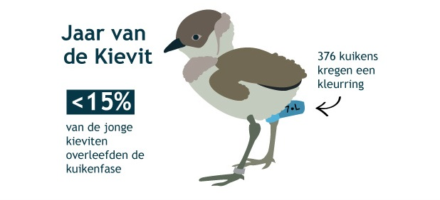 MInder dan 15 procent van de jonge kieviten overleefden de kuikenfase. 376 kuikens kregen een kleurring