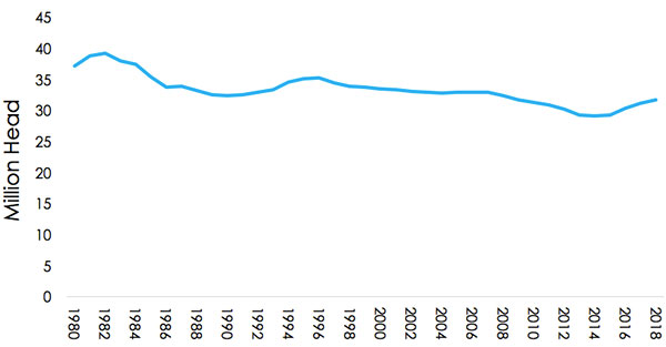 US Beef Cattle Numbers 2000 - 2018