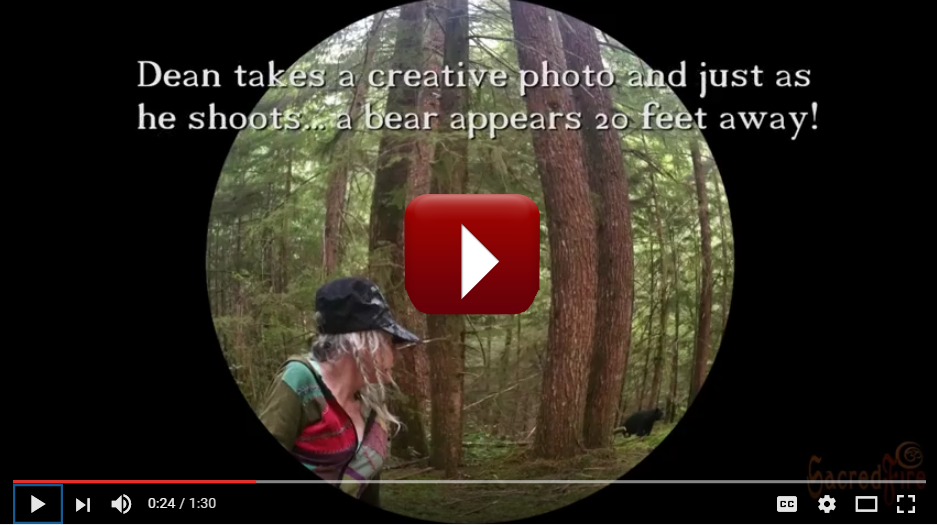 Watch our Bear Encounter Video