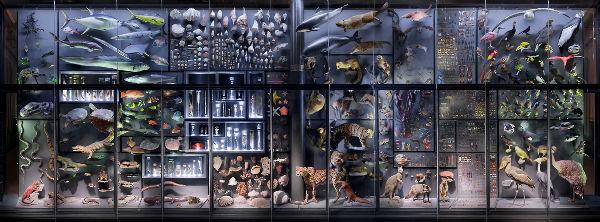 Im HTML Format ist an dieser Stelle ein Bild der Biodiversitätswand aus den Ausstellungen des Museums für Naturkunde.