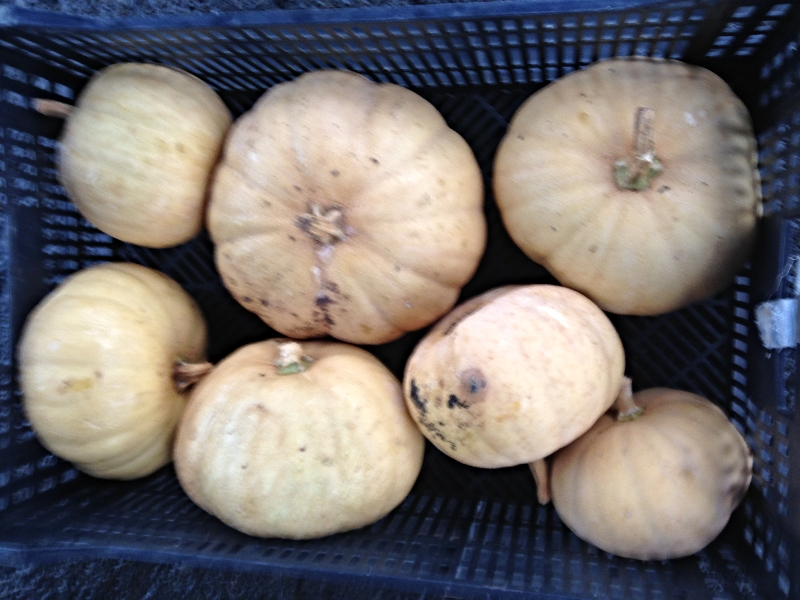Squash from Roots to River Farm