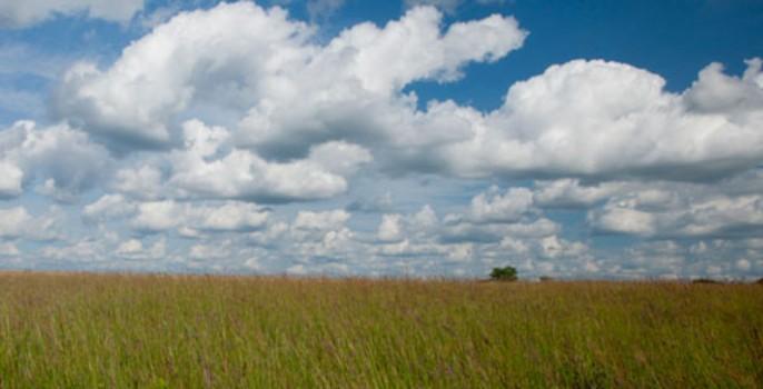 """Minnesota Blues"" Original chalk pastel landscape.  Matted 20"" x 16""  $200  ©Linda Snouffer, Botanical Printmaker        Lindasnouffer.com"