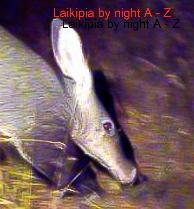 Aardvark Kicheche Laikipia
