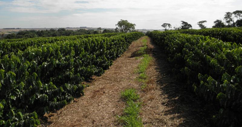 Brasil fazenda Santa Mariana