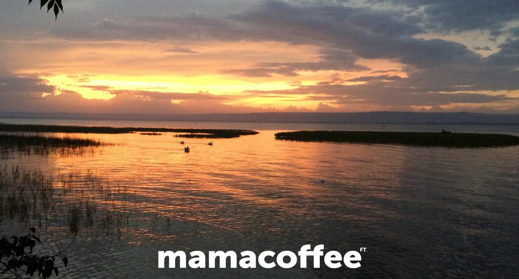 mamacoffee