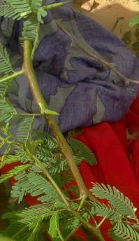 Clothing on Fartun Omar when her body was found outside Buulodbarde, Somalia.