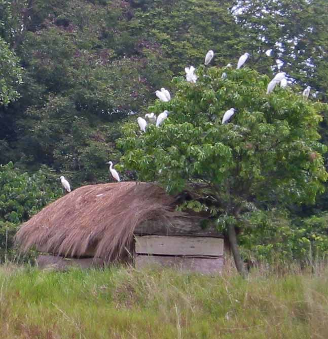 Bukasa Island, Lake Victoria, Uganda. (Wikimedia)