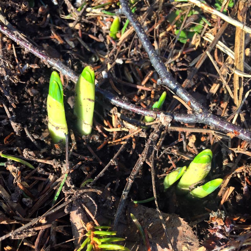 Madeline Island Spring
