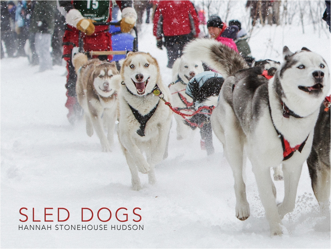 Sled Dogs by Hannah Stonehouse Hudson