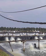 Study compares shimp farms in top six countries