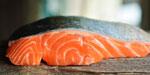 New study on the impact of innovative oils on salmon health
