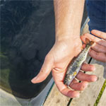 Alltech Coppens to provide next-generation starter feeds for trout