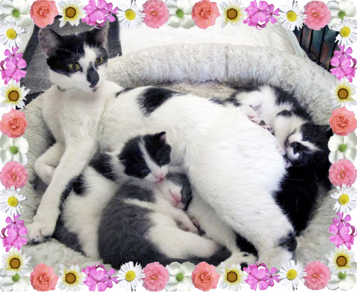 BAA Mother's day kittens