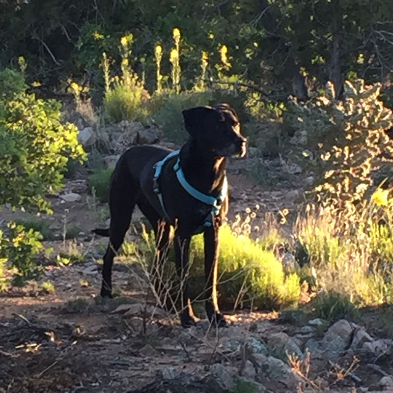 Wilson, the World's Best Pup