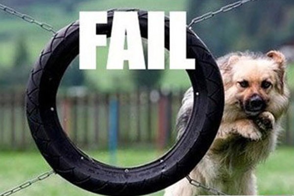 Funny dog fail, epic fail, how to make my website better, how to get over failing in my business