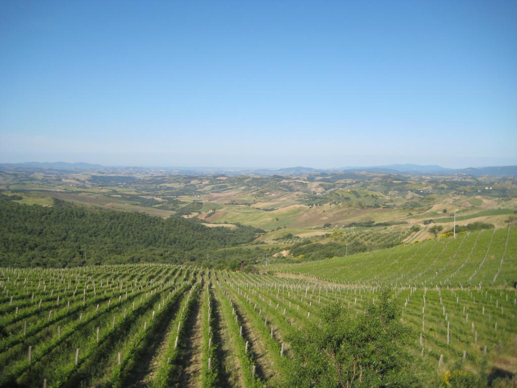 0f935bb1 2688 468b ac45 a16731ec0b23 Your Wine Estate Update