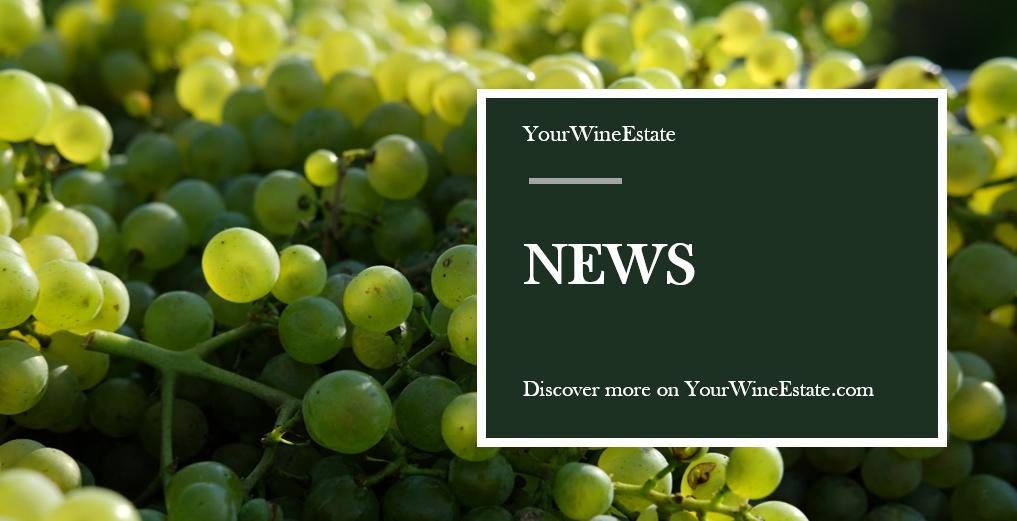 99d42455 b49a 4620 895f 79f96a028c1c Your Wine Estate Update