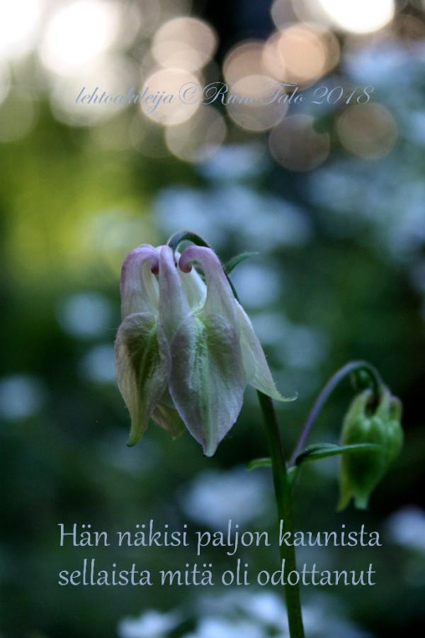 Runotalon voimakortti Hän näkisi paljon kaunista