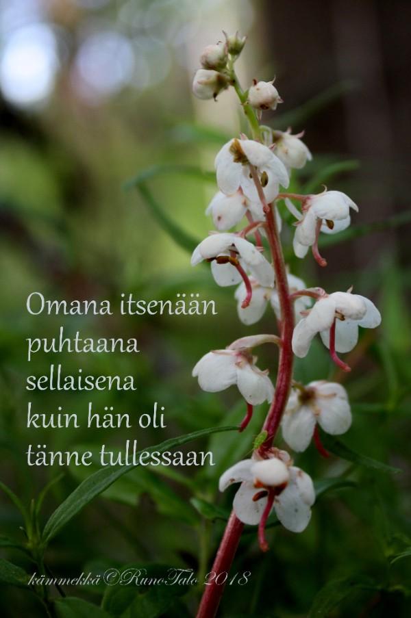 Runotalon voimakortti Omana itsenään puhtaana sellaisena kuin hän oli