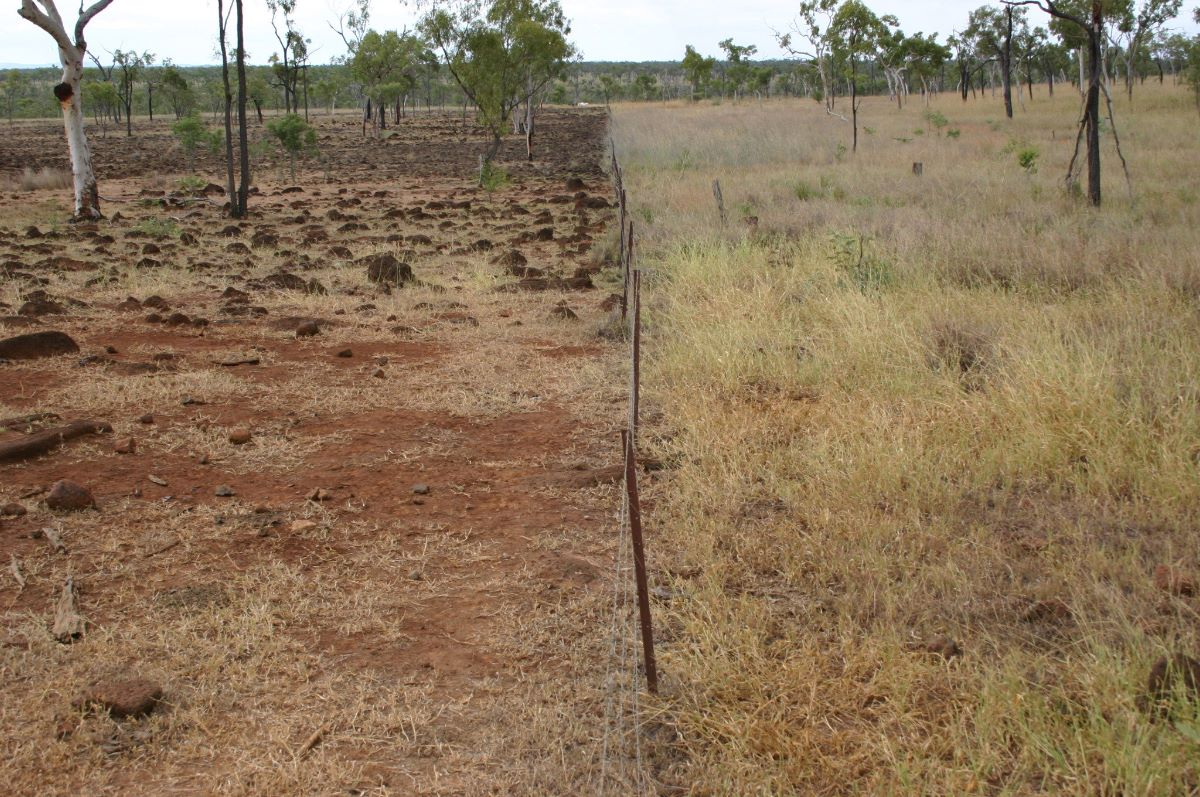 Fence line effect on pasture