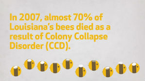 Dying bees infographic