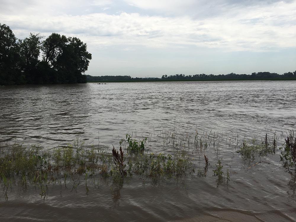 Flooded crop fields in Dodge County