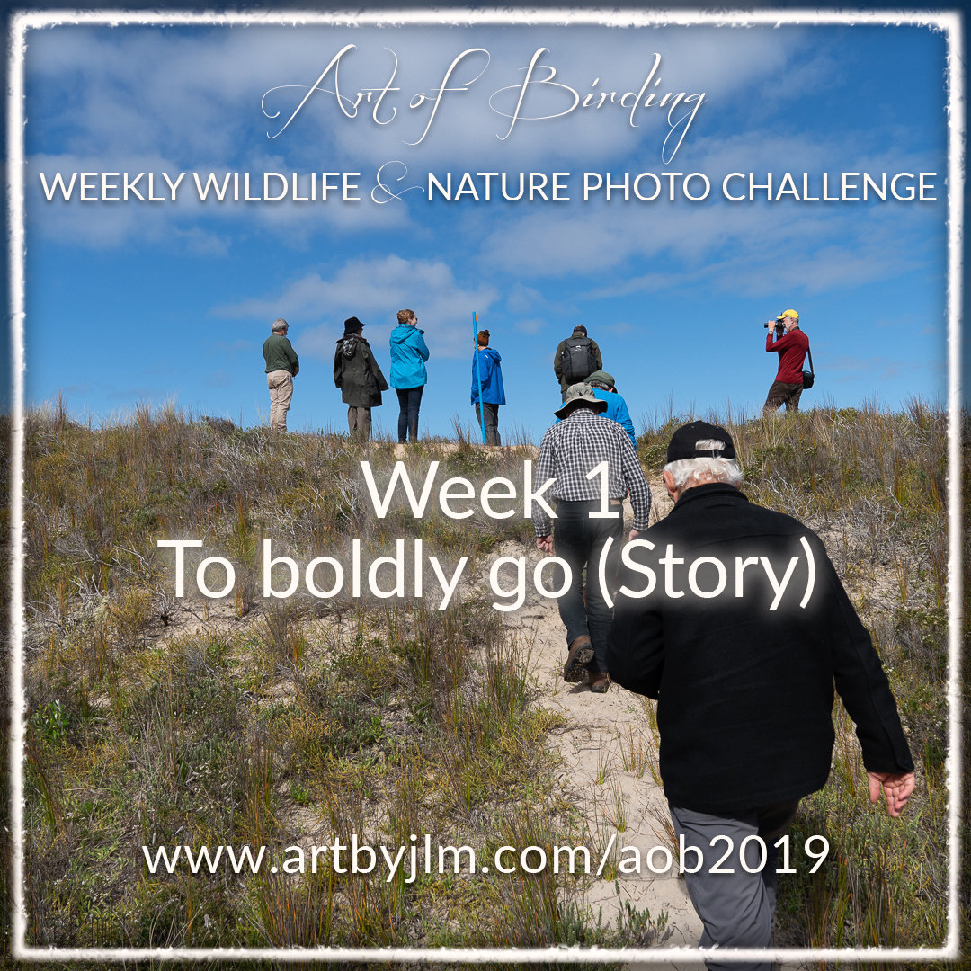 Week 1 challenge - to boldly go - picture shows intrepid people walking up a sand dune in the Chatham Islands
