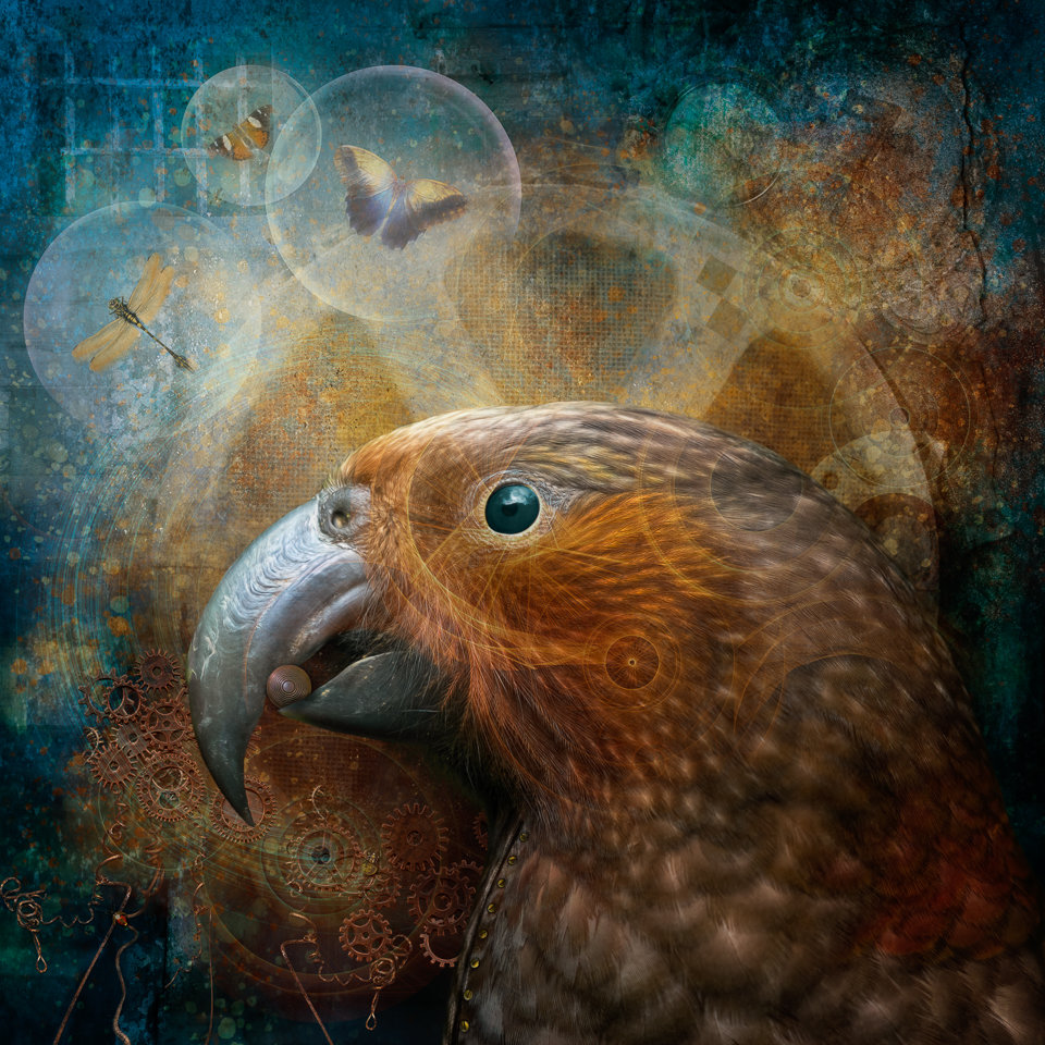 Picture of a kākā in a grungy imaginative setting with steampunk elements
