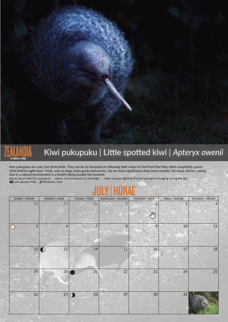 The July page from the Zealandia 2020 calendar