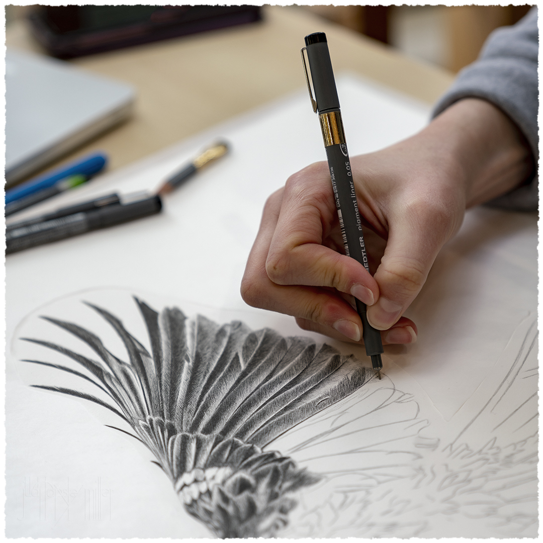 Hannah sketching the details in a tūī wing