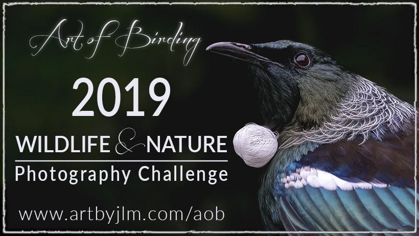 Art of Birding 2019 challenge banner