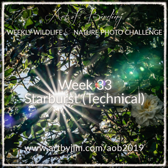 Art of Birding weekly banner