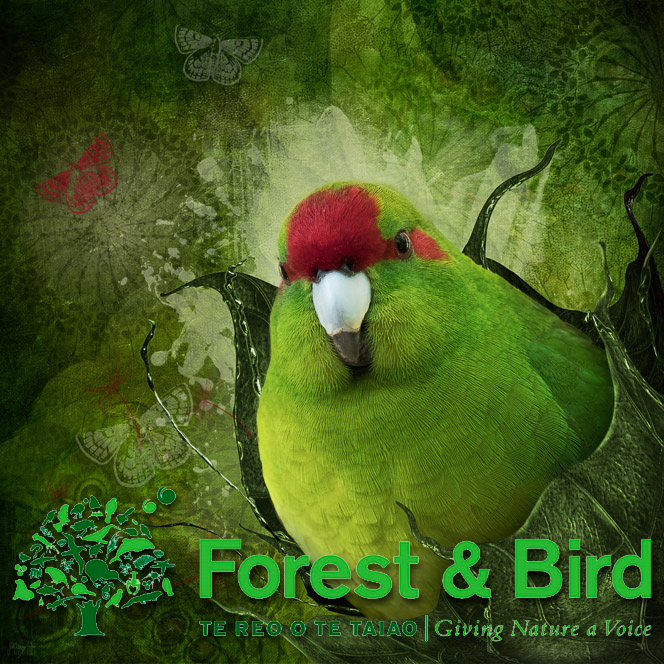 """Bursting Out (kākāriki)"" available at Forest & Bird"
