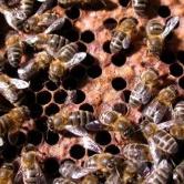 Acteurs du Paris durable - Insectes pollinisateurs et agriculture urbaine