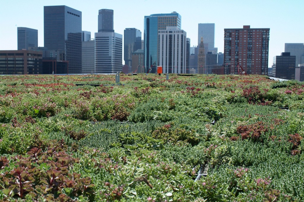A green rooftop in Denver. Credit: EPA