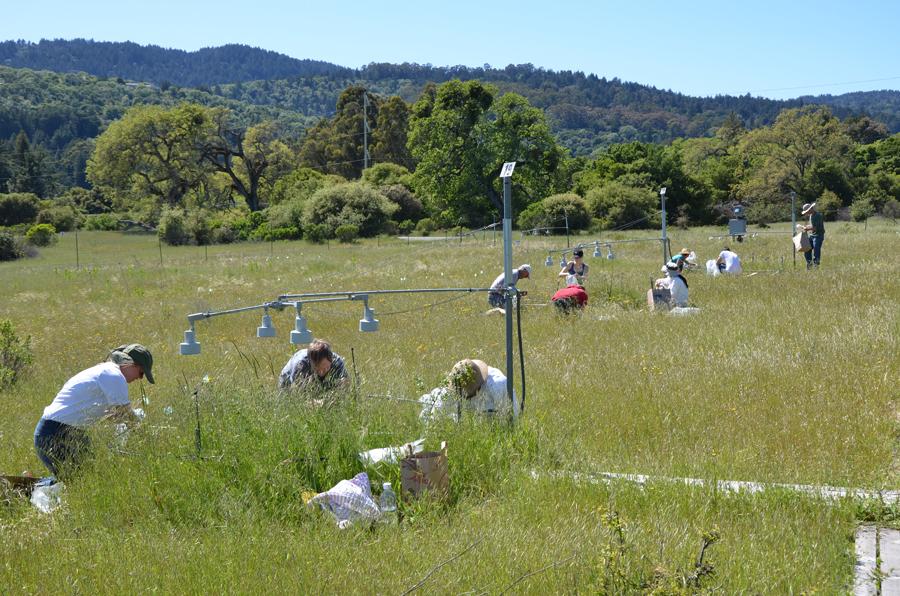 Photo: Participants in Stanford's Jasper Ridge Global Change Experiment sample plots of the grassland ecosystem. Credit: Nona Chiariello