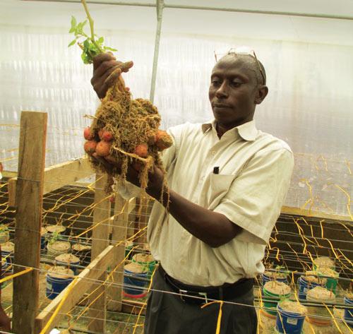 Seed Potato Development project in Tanzania