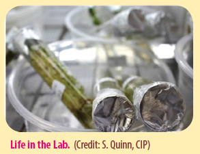 Life in the Lab. (Credit: S. Quinn, CIP)