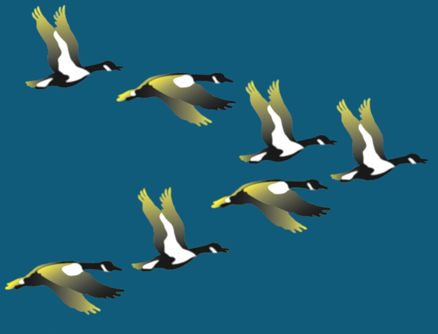 CCEDNet geese