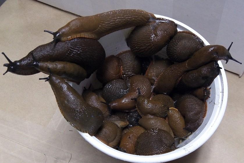 detox slugs