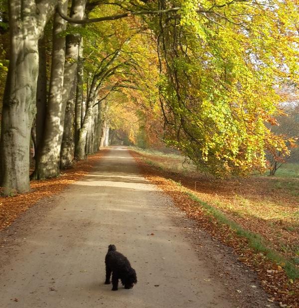 Hund i skov