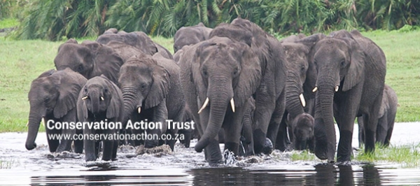 Conservation Action Trust